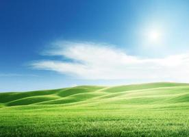 perfektes Feld von Frühlingsgras