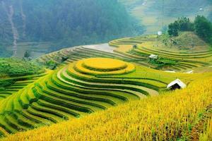 Reisfelder auf Terrassen von Mu Cang Chai, Yenbai, Vietnam. foto