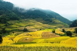 Reisfelder auf terrassierten foto