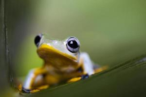 exotischer Frosch