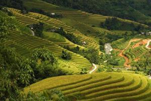 terrassierte Felder in Hoang Su Phi, Ha Giang, Vietnam.