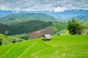 schöne Aussicht auf Reisfeld und Hütte