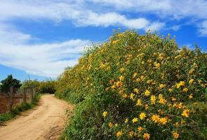 Dalat Landschaft, da quy Blume