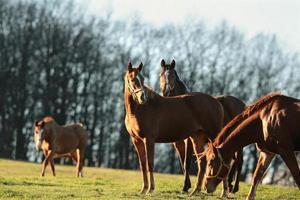 Pferde auf einer Weide
