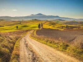 Zypressen auf der Straße in der toskanischen Landschaft