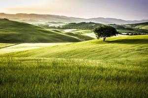 Sonnenaufgang über den grünen Feldern in der Toskana