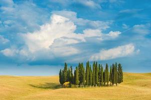 Zypressenerinnerungen an Feiertage in der Toskana, Italien