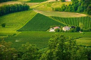Weinberge von Vittorio Veneto, Treviso