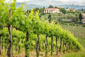 Weinfeld auf dem Hintergrund einer Hacienda