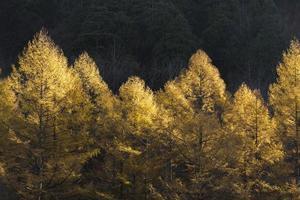 Bäume aus Herbstlaub.