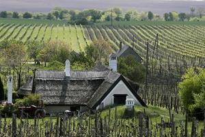 Weinberge und Bauernhaus am Plattensee