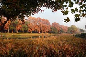 Herbstlaub in der Nähe eines Baches