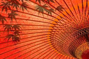 japanischer Regenschirm und Ahorn