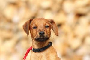 Porträt des niedlichen Hundes foto