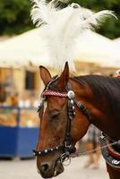 Krakau, Polen, Pferdekutschen mit Führern foto