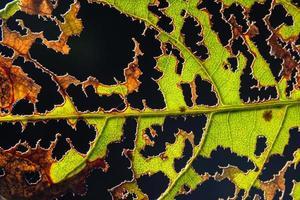 grünes Blatt auf schwarzem Hintergrund foto