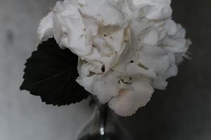 weiße Blütenblätter