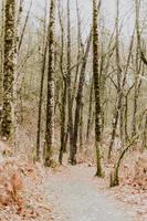 Herbstbäume ohne Blätter in der Nähe des Weges im Wald
