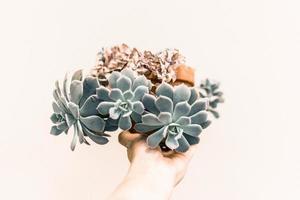 Person, die eine grüne Sukkulentenpflanze hält foto