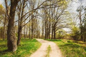 Frühlingssaison im Park. grünes junges Gras, Bäume