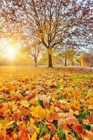 sonniges Herbstlaub