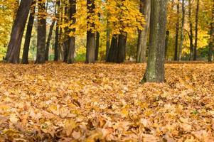 bunte gefallene herbstgelbe und orange Blätter im Park foto