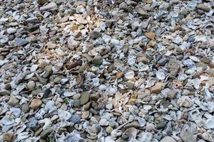 Muscheln und Kieselsteine an der Küste foto