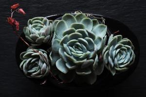 vier saftige mehrjährige Pflanzen foto