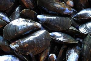 Makrofotografie von Muscheln für Lebensmittelhintergrund