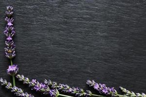 Zweige Lavendel foto