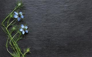 Nigella-Blüten auf Schiefer