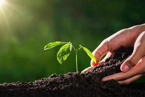 Pflanze wächst mit Hand und Sonnenschein im Garten