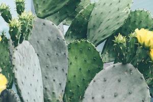 grüne Kaktuspflanze während des Tages foto