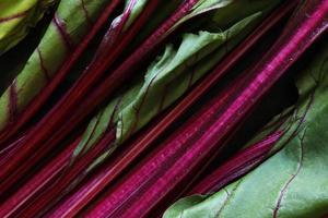 Rote-Bete-Stängel und Blätter foto