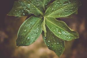 Tropfen auf eine Pflanze foto