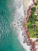 Luftaufnahme von grünen Bäumen am Strand