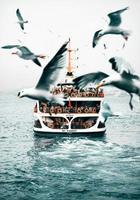 Möwen fliegen über die Spur eines vorbeifahrenden Schiffes