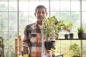 Porträt eines älteren asiatischen Mannes, der eine Pflanze hält