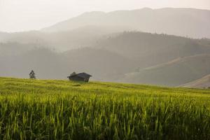 Terrasse Reisfelder