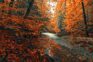Fluss zwischen orangefarbenen Blättern