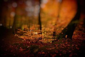 flacher Fokus des Herbstlaubs im Wald foto
