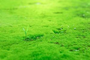 Nahaufnahme des schönen hellgrünen Mooses im Garten mit Steinen
