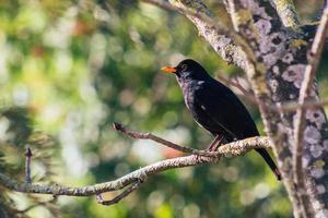 Nahaufnahme des schwarzen Vogels foto
