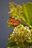 großer roter Schmetterling, der von einer grünen Pflanze abhebt