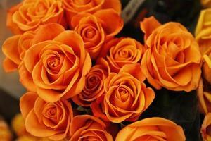 Nahaufnahme von Orangenblüten foto