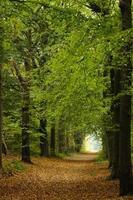 Weg durch den Wald foto