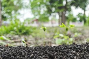 Pflanzen, die aus dem Boden sprießen foto
