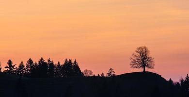 Silhouetten von Bäumen auf einem Hügel in den Schweizer Alpen