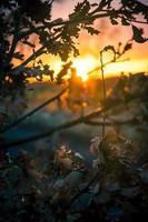 Baumschattenbild während des Sonnenuntergangs