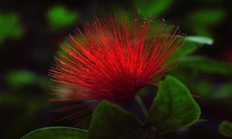 rote und grüne Pflanze in Nahaufnahmefotografie